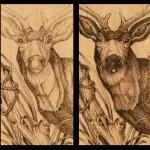Mule Deer Pyrography