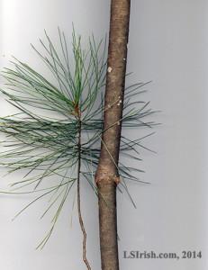 White Pine Walking Stick Wood Carving